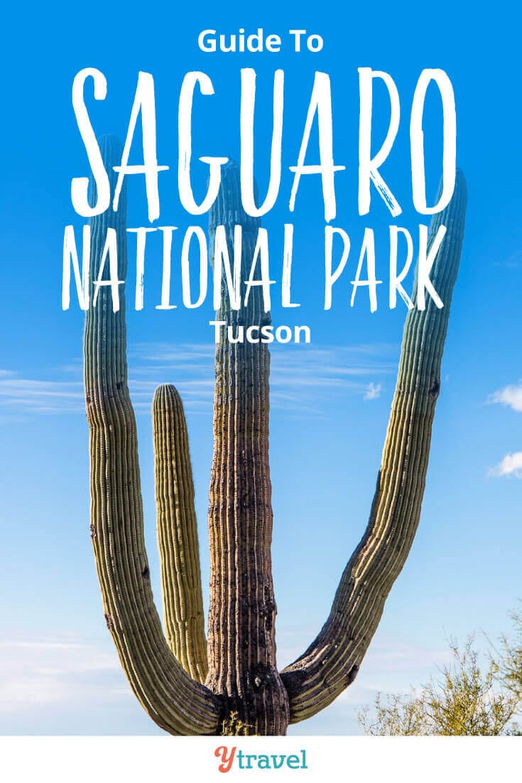 8 amazing things to do in Saguaro National Park in Tucson. Plus tips on places to stay in Tucson! This National Park in Arizona is one of the best places in the USA to see giant cactus.