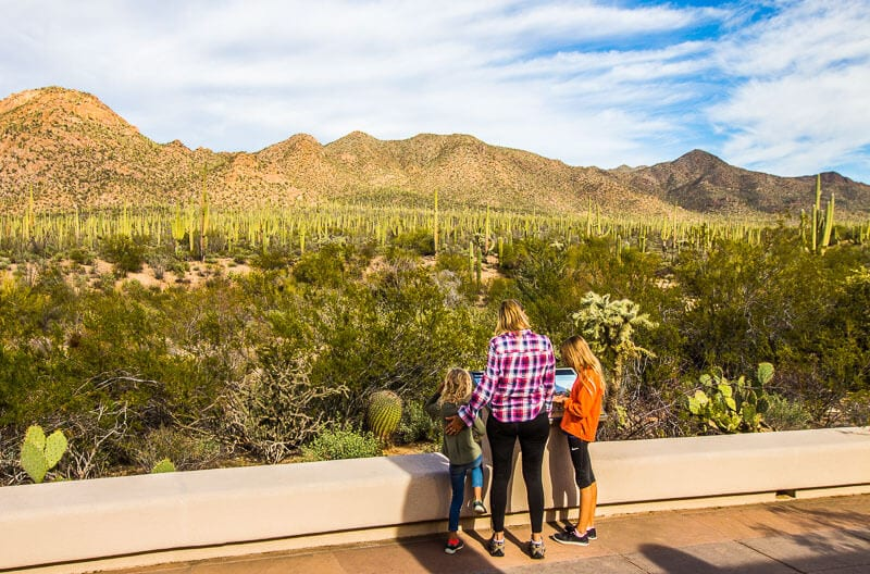 saguaro-national-park-west-3 ▷ Comenta sobre 8 cosas increíbles para hacer en el Parque Nacional Saguaro en Tucson, Arizona por Why I Love Loews Ventana Tucson Canyon: un resort familiar