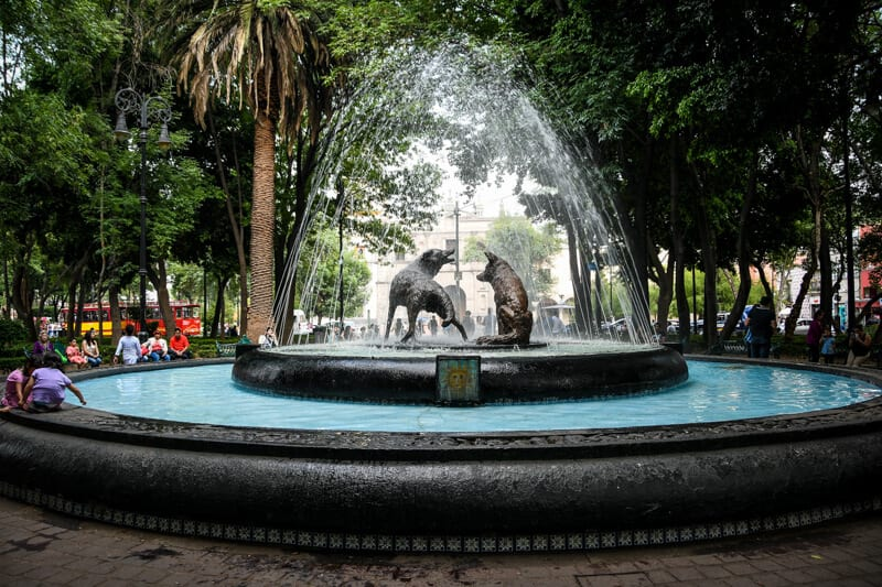Wander the Coyoacan Neighborhood