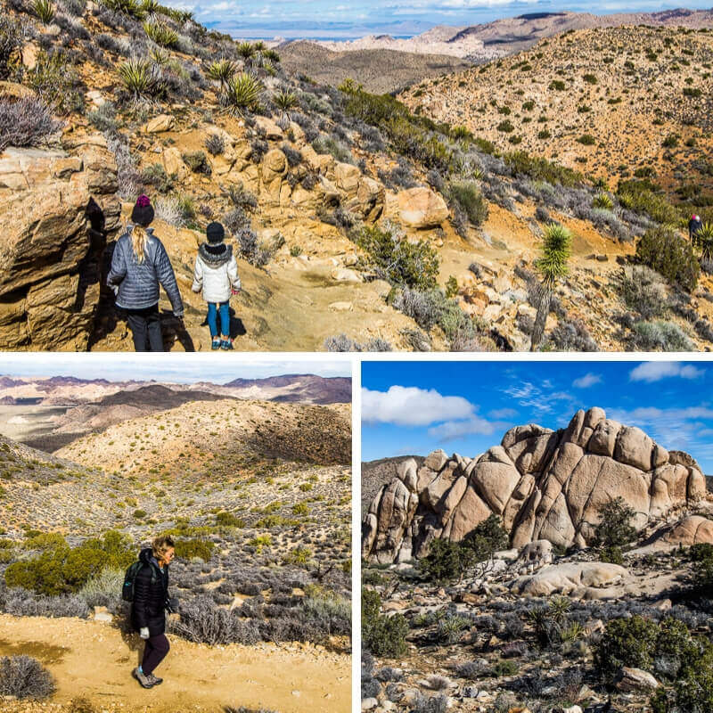 Ryan Mountain Trail, Joshua Tree National Park