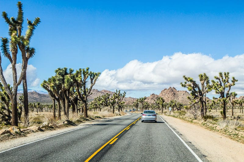 Where is Joshua Tree National Park