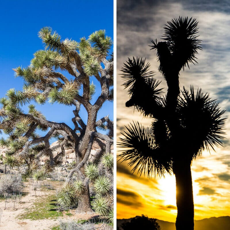 Things to see in Joshua Tree National Park