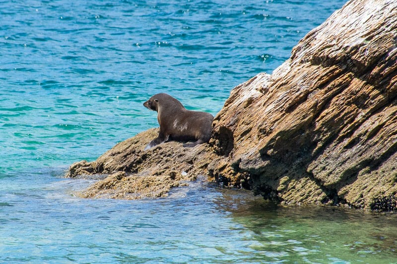 Seal watching in the Marlborough Sounds