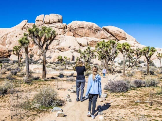 Best things to do in Joshua Tree National Park