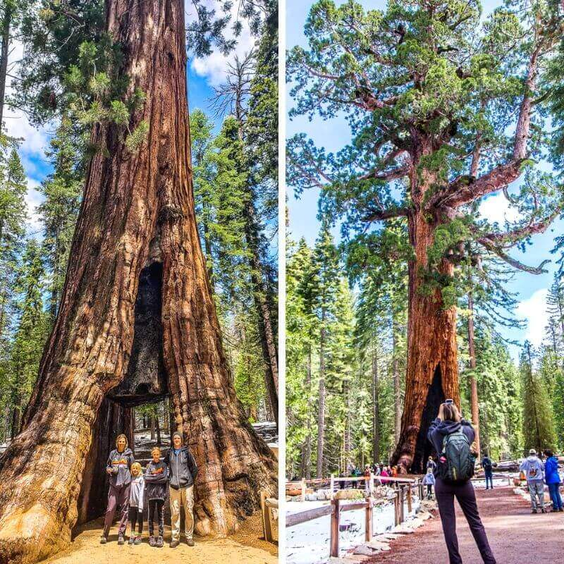 mariposa-grove-yosemite-np-1 ▷ Comente sobre 30 lugares increíbles para visitar en California para su lista de deseos de California en 9 de las mejores playas de California