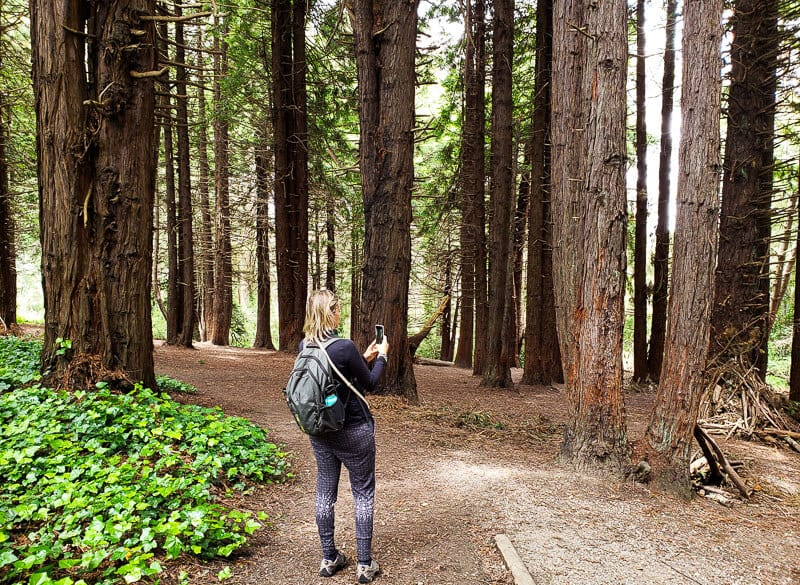 easy hike for kids in the Presidio