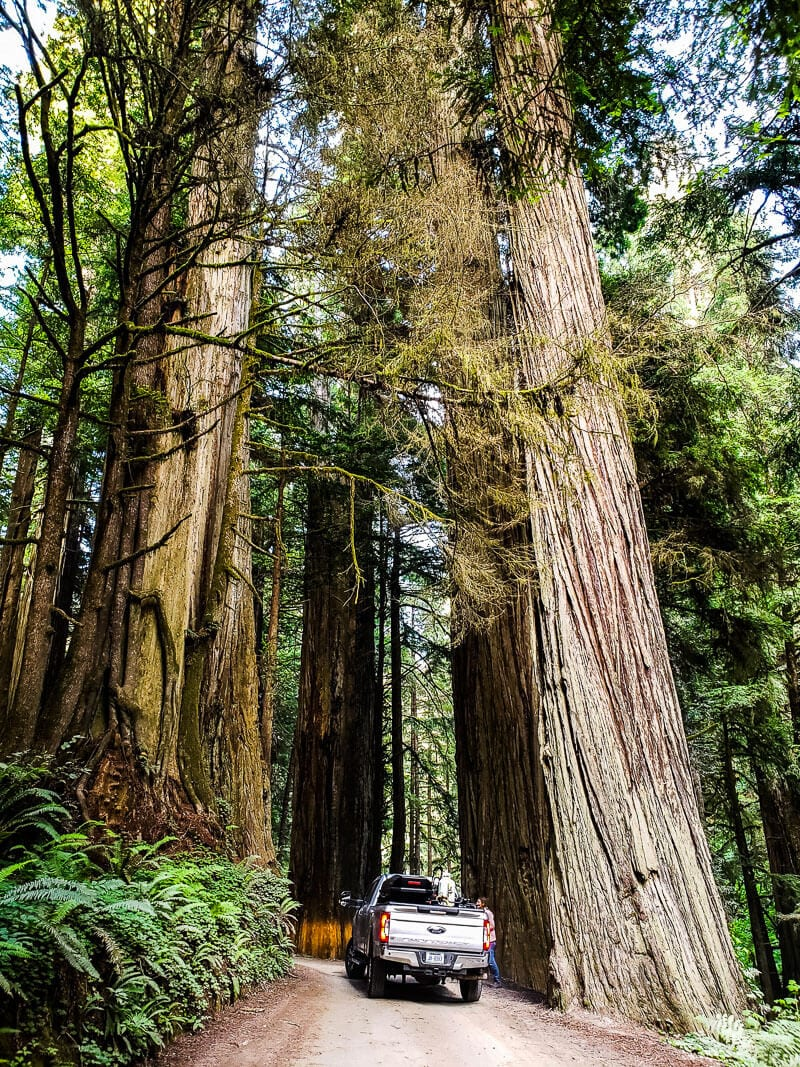 Jebediah State Forest Northern california