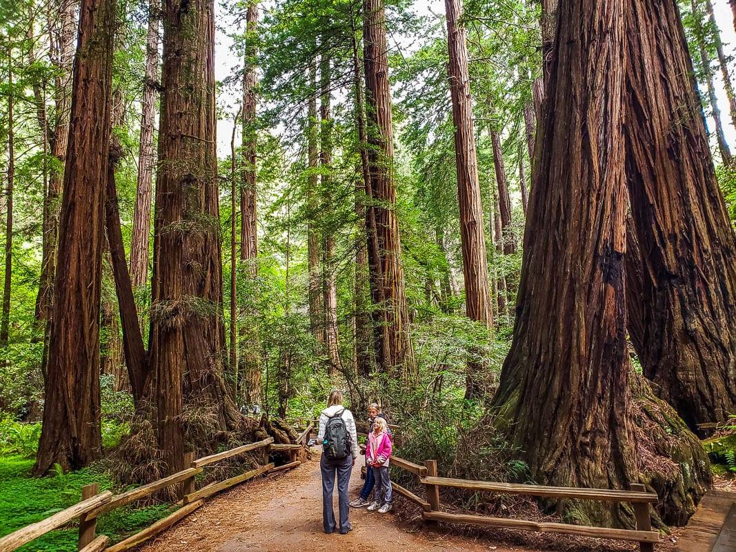 Muir Woods - Une des meilleures choses à faire à San Francisco avec des enfants