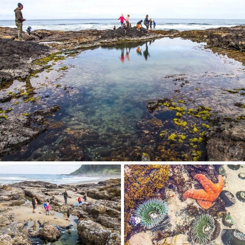 Oregon tide pools