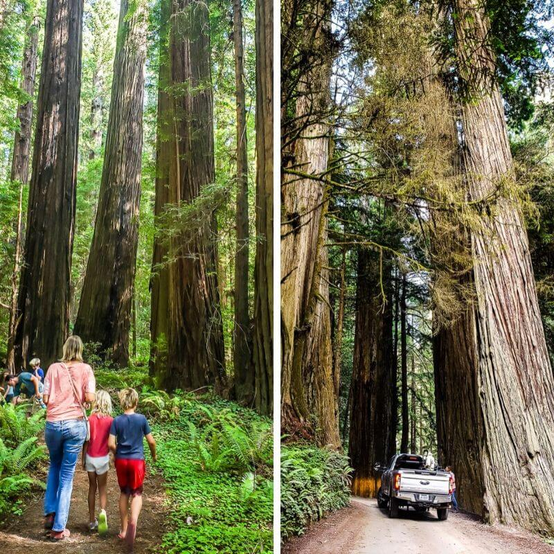 Redwoods National & State Parks California