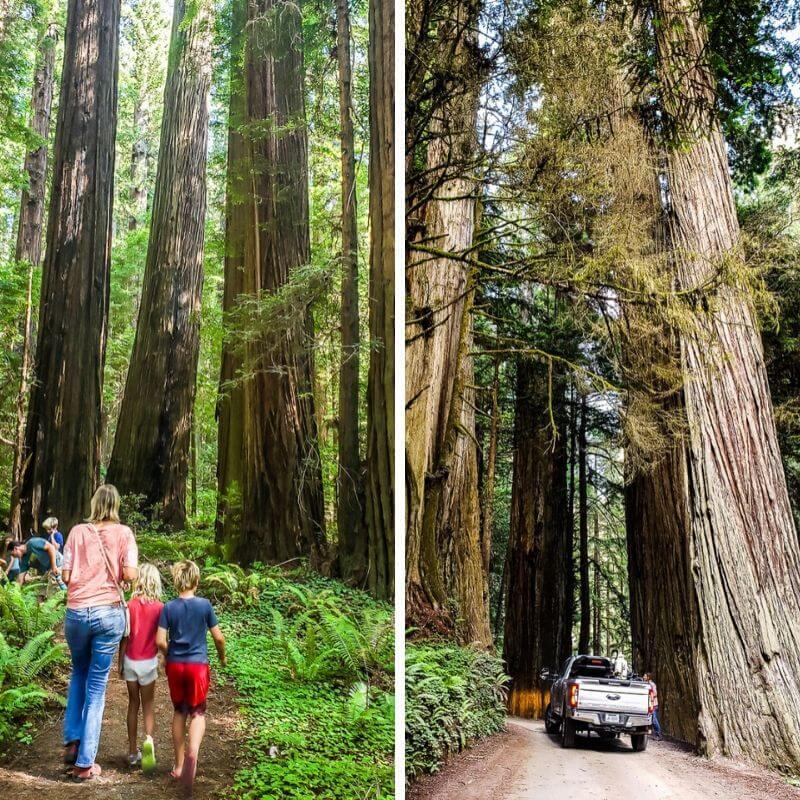 Redwoods National et State Parks Californie