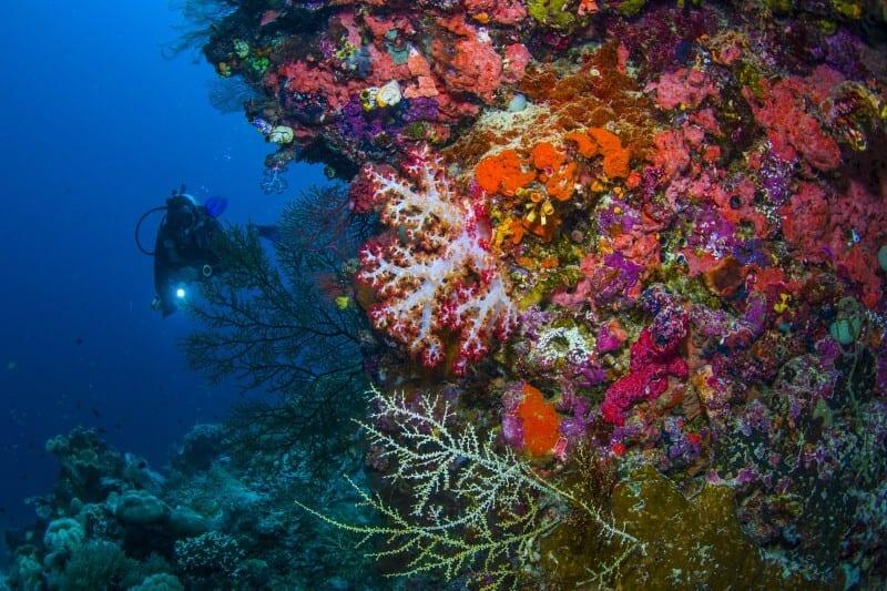 Raja Ampat buceo bajo el agua por Edo Ang 2016 (3)