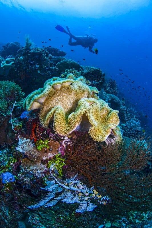 Plonger à Raja Ampat, Indonésie