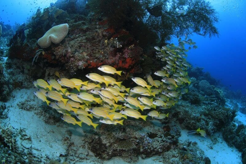 Raja Ampat buceo bajo el agua por Edo Ang 2016 (5)