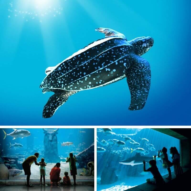 Marine Habitat Atlantis Bahamas