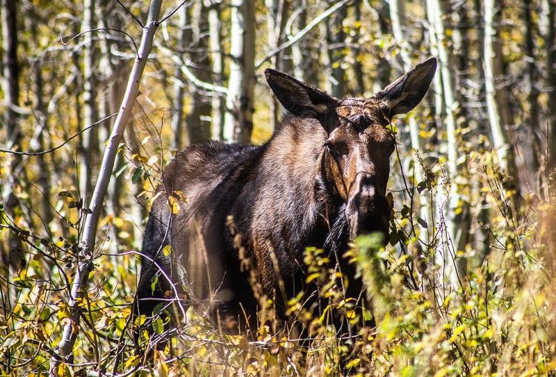 Moose Pond trail, Grand Teton National Park