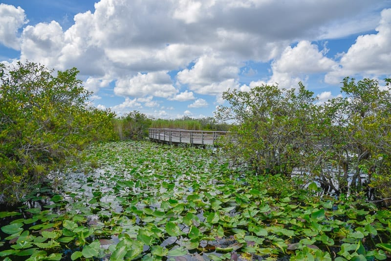 Everglades National Park, places to visit in Florida