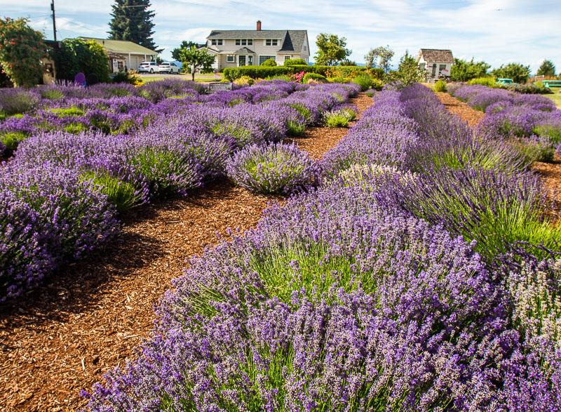 Hood River Lavender Farm