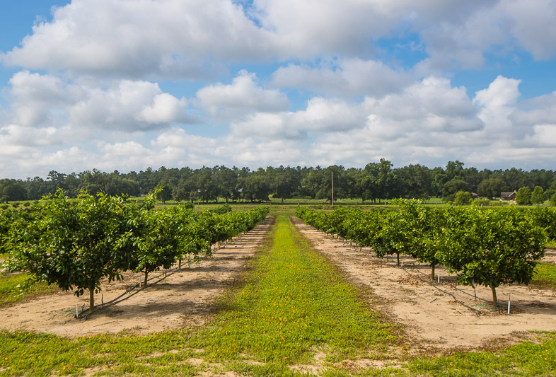 Florida Georgia Citrus Company