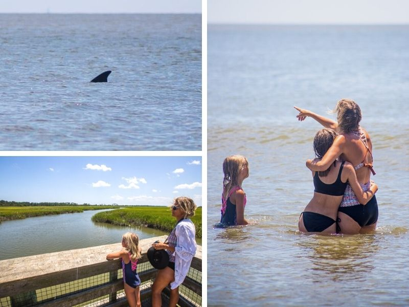 swimming at Hunting Island State Park with dolphins