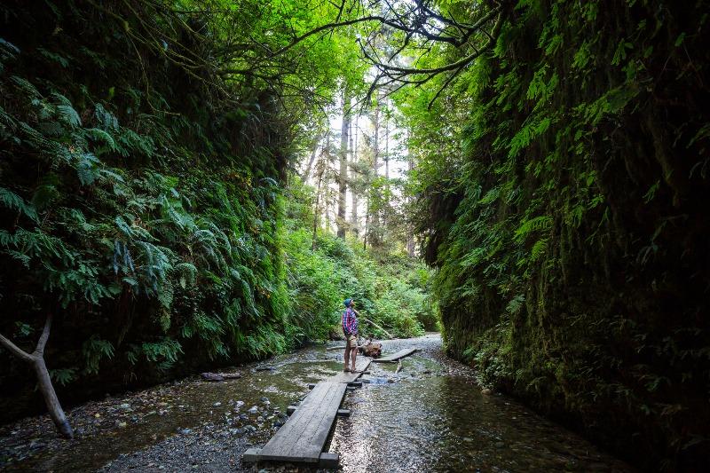 fern canyon northern california