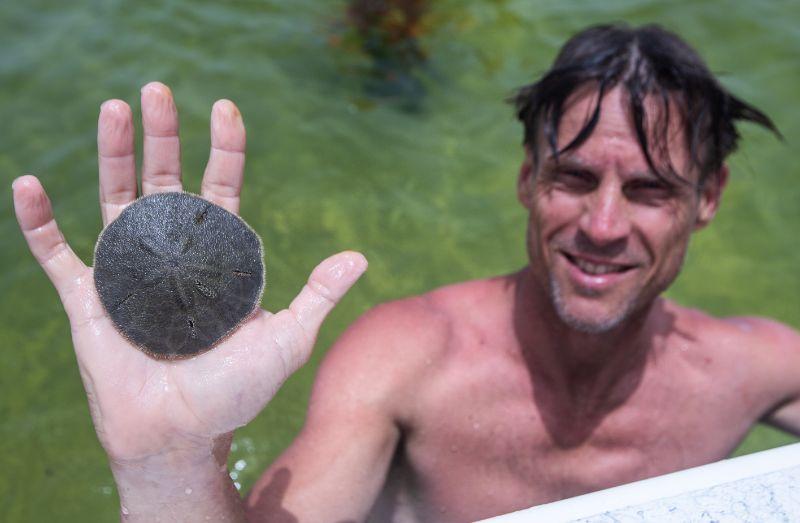 steinatchee sand dollar gulf coast scalloping
