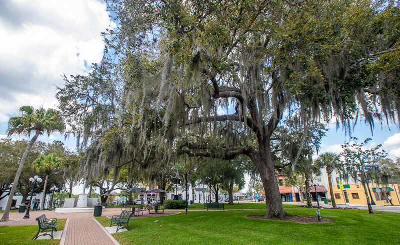 Magnificent tree on the roundabout in Sebring, Florida