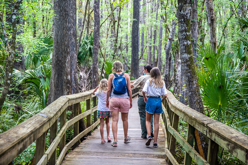 Highlands Hammock State Park, one of the best things to do in Sebring, Florida