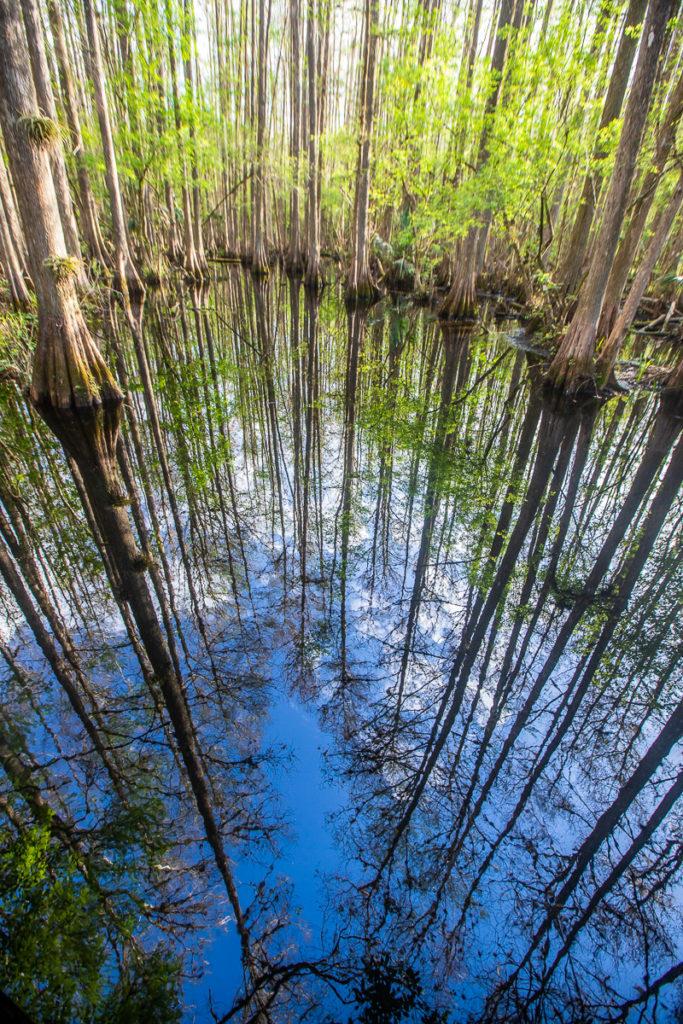 Highlands Hammock State Park, Sebring. Florida