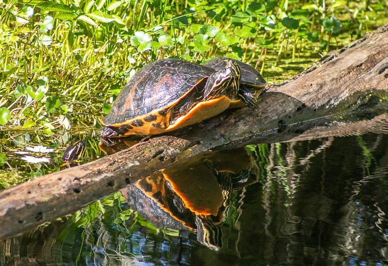 Highlands Hammock State Park, Florida