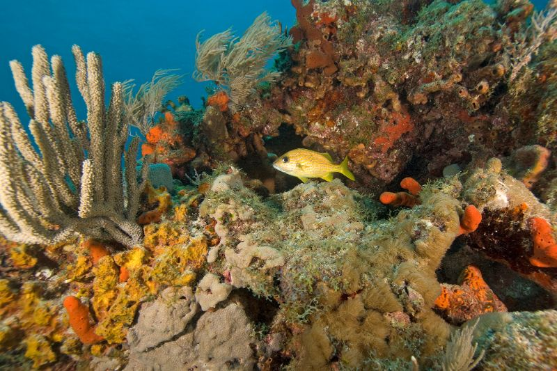 John Pennekamp Coral Reef State Park florida keys
