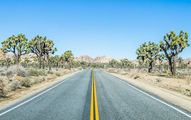 On the road in Joshua Tree National Park