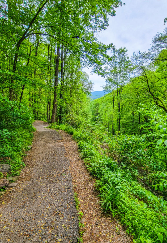 Trail in Amicalola Falls State Park, Georgia