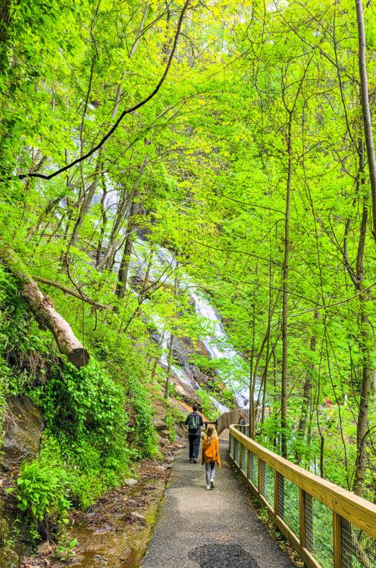 Trail at Amicalola Falls