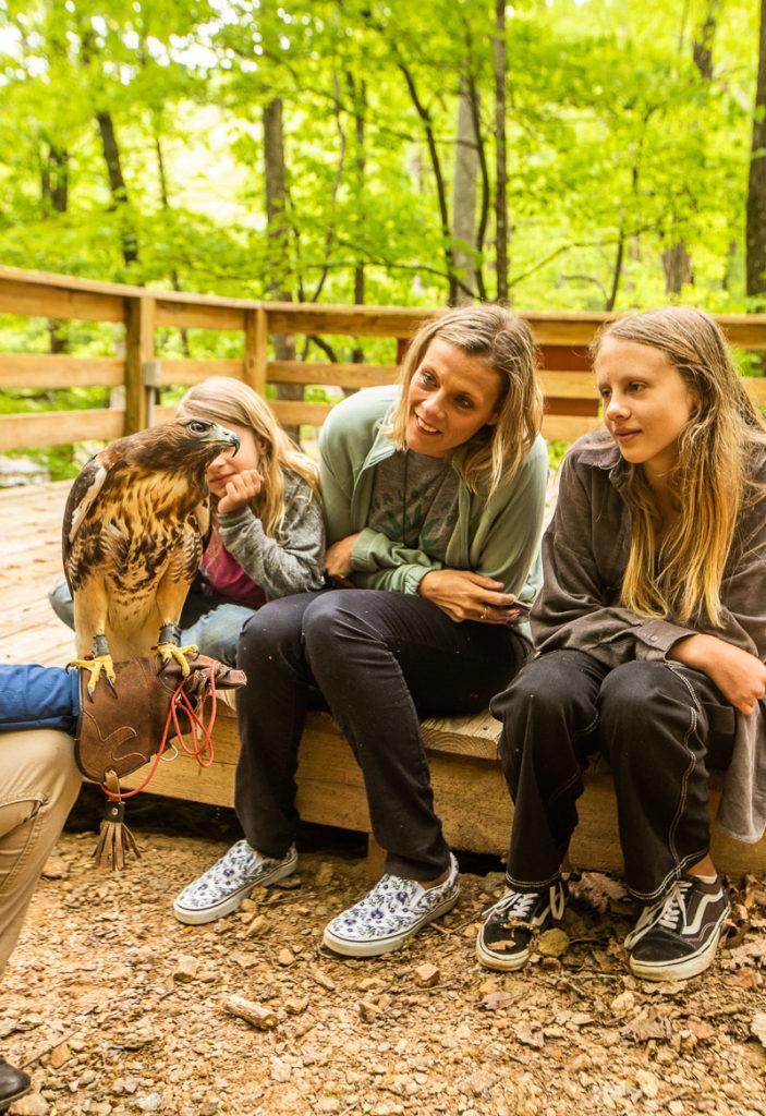 Birds of Prey at Amicalola Falls State Park