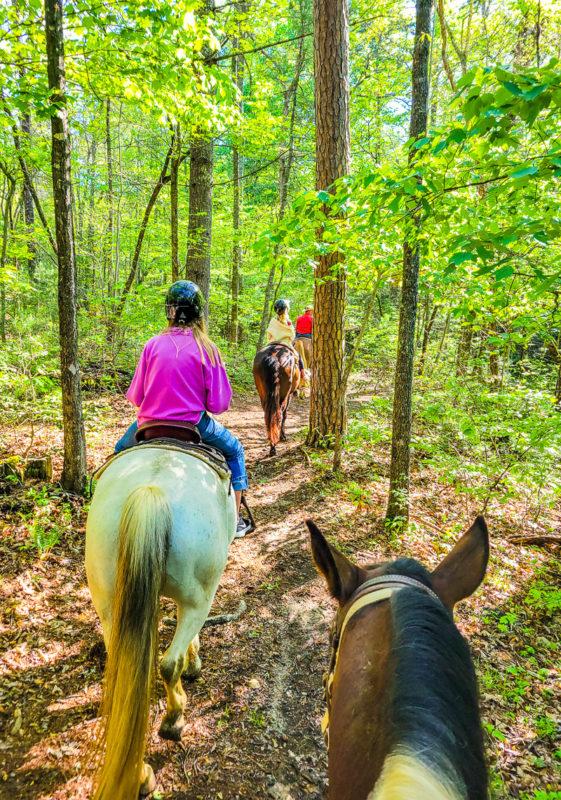 Horse riding at Brasstown Valley Resort & Spa