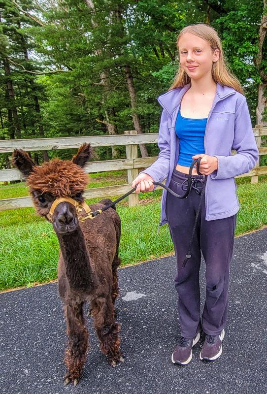 Point of View Alpaca Farm in Virginia