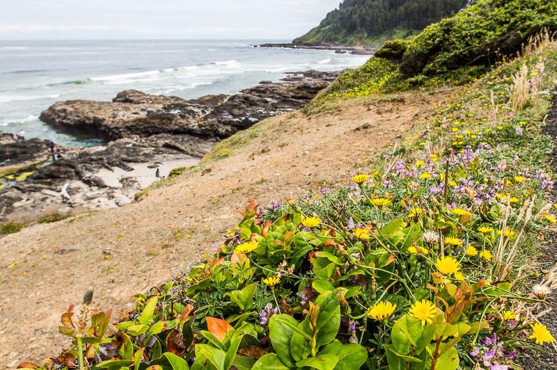 Cape Perpetua Scenic Area