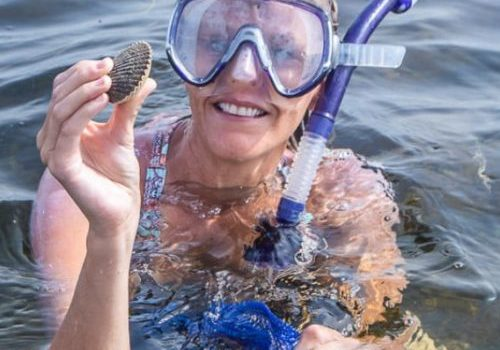 scalloping in Florida steinhatchee